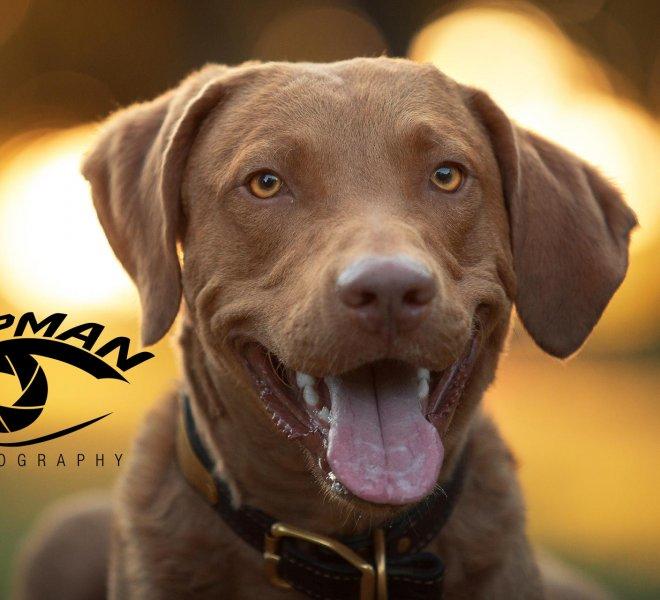 Dog portrait Tulsa
